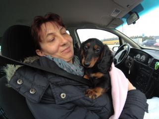 Transport psów, kotów, zwierząt domowych U.K-PL